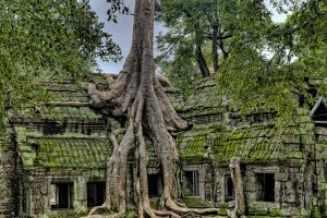 Spung on a temple in Ta Prohm